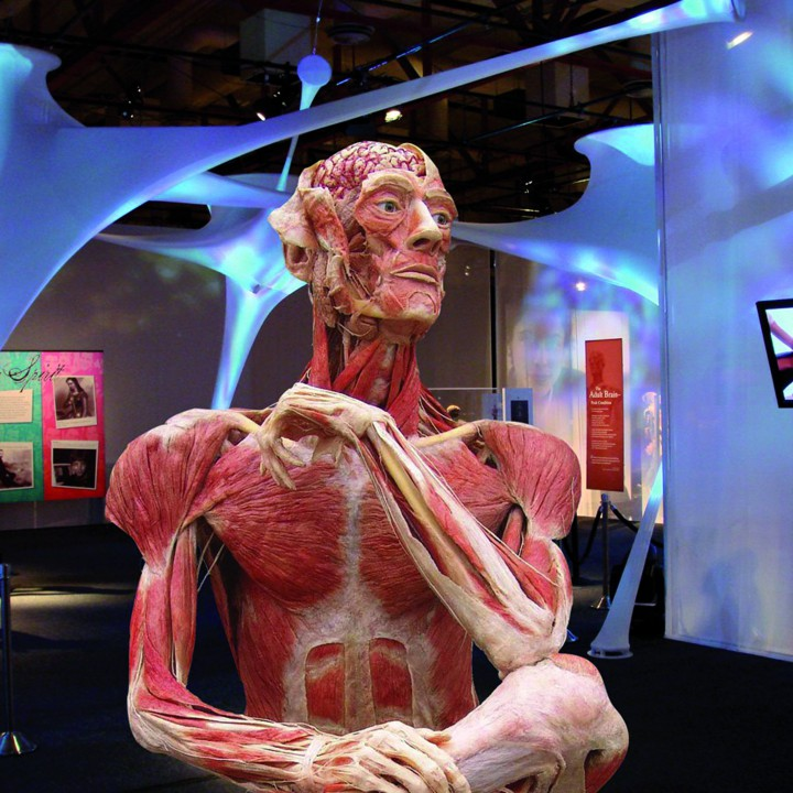 BODIES: THE EXHIBITION & BODY WORLDS