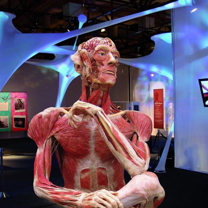 BODIES: THE EXHIBITION & BODY WORLDS